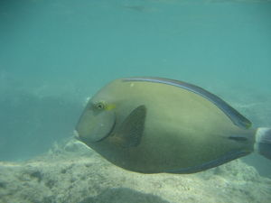 A Fish from Snorkeling