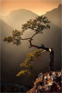 meditation masters tree