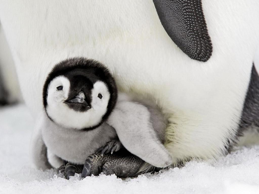 Baby animals that make you smile - Animal mignon ...