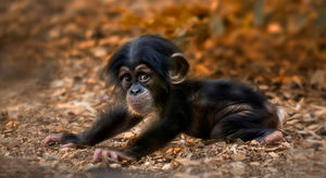 cute-baby-animals-baby-monkey