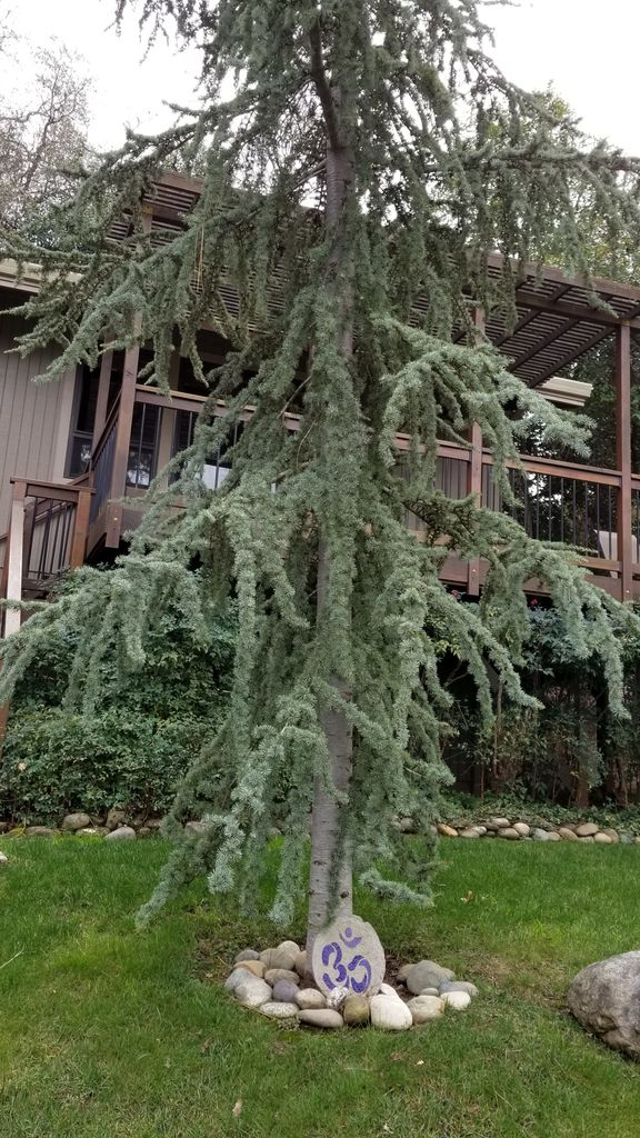 Sacred Tree-view from the front of our house